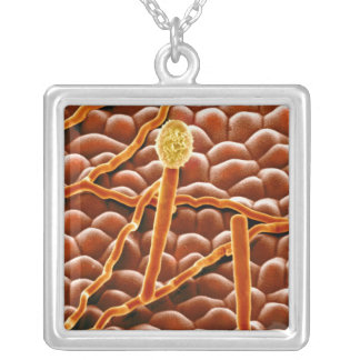 Powdery Mildew Fungus on Poinsettia Silver Plated Necklace