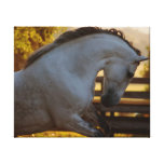 Power Of An Andalusian Mare Stretched Canvas Prints