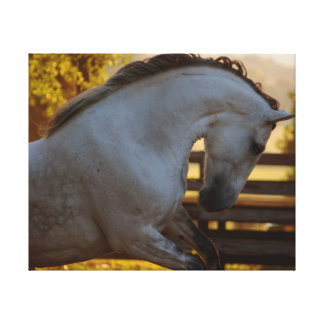 Power Of An Andalusian Mare Canvas Print