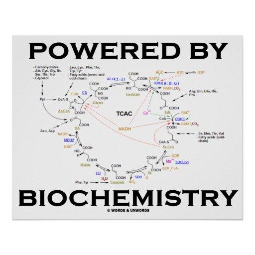 Powered By Biochemistry (Krebs Cycle) Poster