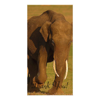 Powerful Elephant Lifts Right Foot Photo Cards