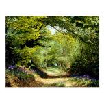 Powerhill Woodlands Battle, East Sussex, England E Postcard