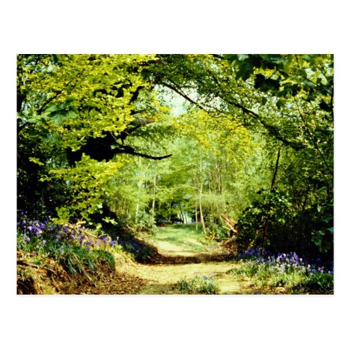 Powerhill Woodlands Battle, East Sussex, England Postcard