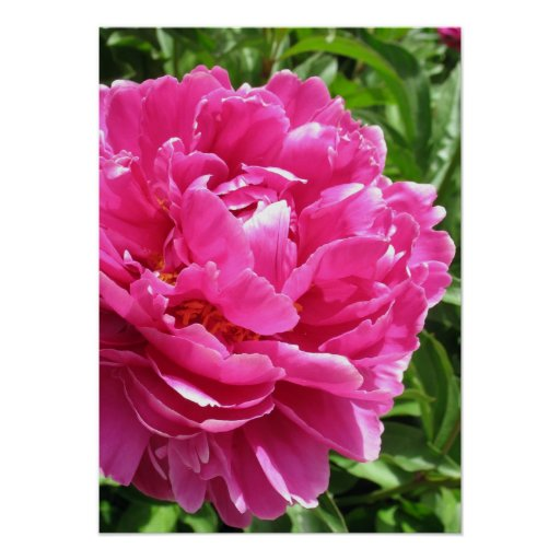 Practically Perfect Peony Poster