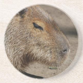 Práctico de costa australiano del Capybara Posavasos Para Bebidas