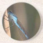 Práctico de costa azul de la libélula posavasos cerveza