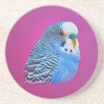 Práctico de costa azul del Parakeet Posavasos Diseño