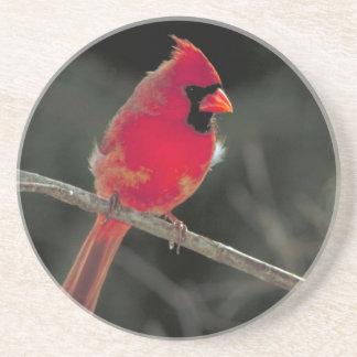 Práctico de costa cardinal posavaso para bebida