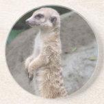 Práctico de costa contrapesado de Meerkat Posavasos Personalizados