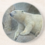 Práctico de costa de Cub del oso polar Posavasos De Arenisca
