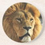 Práctico de costa de la bebida de la foto del león posavasos personalizados