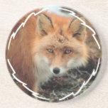 Práctico de costa de la especie del Fox Posavasos Manualidades