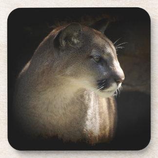 Práctico de costa de la fauna del gato grande del  posavasos de bebidas