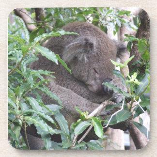 Práctico de costa de la koala posavaso
