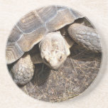 Práctico de costa de la tortuga posavasos manualidades