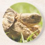 Práctico de costa de la tortuga posavaso para bebida