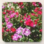 Práctico de costa de las flores del bonito posavasos