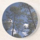 Práctico de costa de los árboles de pino de Alabam Posavasos Diseño