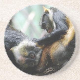 Práctico de costa de los monos de Guenon Posavasos Cerveza