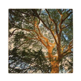 Práctico de costa de madera del árbol del Madrona Posavasos De Madera