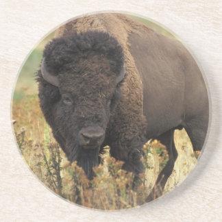 Práctico de costa de madera del bisonte posavasos para bebidas