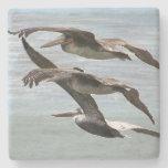Práctico de costa de piedra animal de la playa de posavasos de piedra