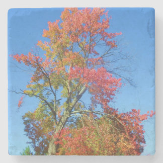 Práctico de costa de piedra del follaje de otoño posavasos de piedra