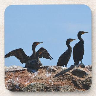 Práctico de costa del ave marina posavasos