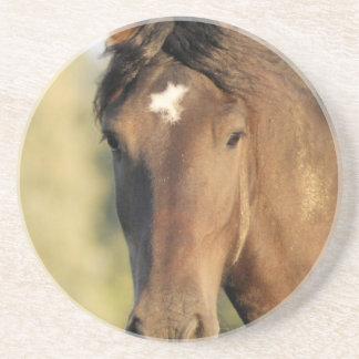 Práctico de costa del caballo de Morgan Posavasos Personalizados