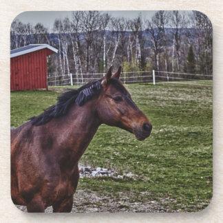 Práctico de costa del caballo posavaso
