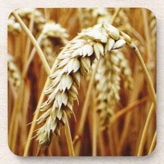 Práctico de costa del campo de trigo posavasos de bebidas