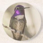 Práctico de costa del colibrí posavasos personalizados