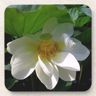 Práctico de costa del corcho con la flor de Lotus  Posavasos De Bebidas