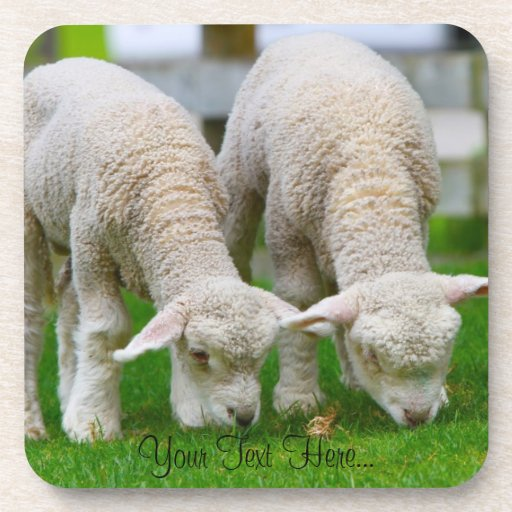 """Práctico de costa del corcho de """"dos ovejas"""" posavasos de bebidas"""
