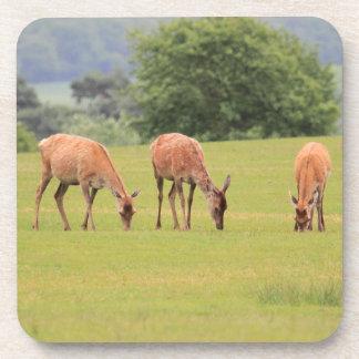 Práctico de costa del corcho de los ciervos posavasos de bebidas