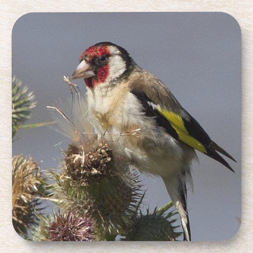 Práctico de costa del corcho del Goldfinch Posavasos