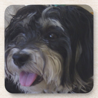 práctico de costa del corcho del perro del maltipo posavaso