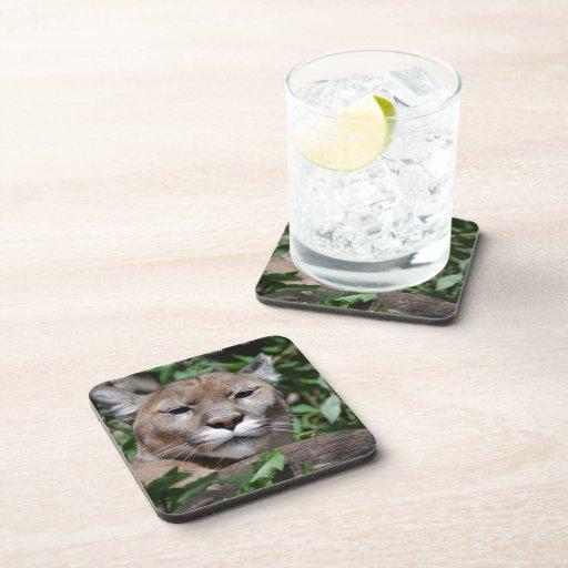 Práctico de costa del corcho - modificado para req posavasos de bebida