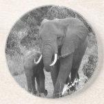 Práctico de costa del elefante y del becerro posavasos manualidades