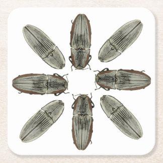 Práctico de costa del escarabajo de tecleo posavasos de cartón cuadrado