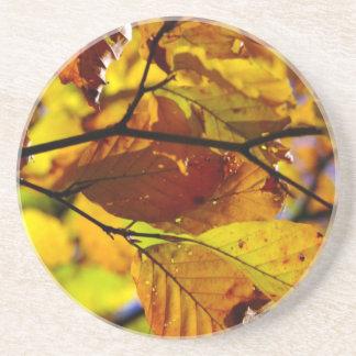 Práctico de costa del follaje de otoño posavasos para bebidas