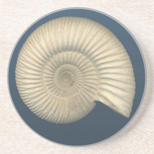 Práctico de costa del fósil de la amonita de posavasos de arenisca