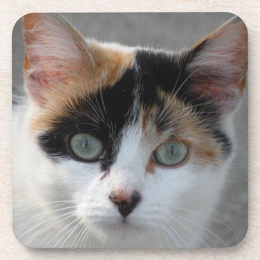 Práctico de costa del gato de calicó posavasos