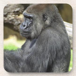 Práctico de costa del gorila del Silverback Posavaso