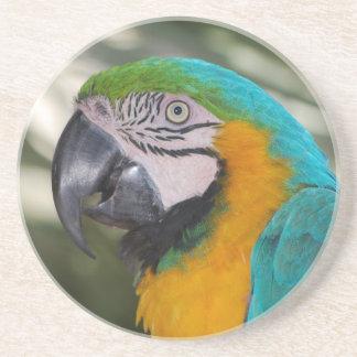Práctico de costa del loro del Macaw del azul y de Posavasos De Arenisca