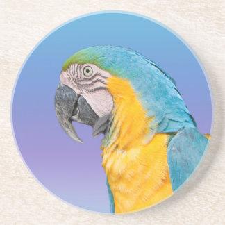 Práctico de costa del loro del Macaw Posavasos Diseño