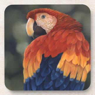 Práctico de costa del Macaw Posavasos De Bebida