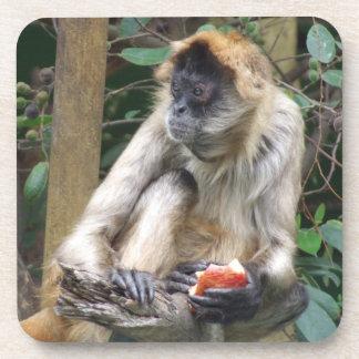 Práctico de costa del mono de araña posavasos de bebidas