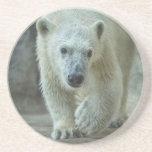 """Práctico de costa del """"pie grande"""" de Cub del oso  Posavasos Diseño"""
