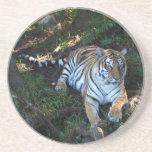 Práctico de costa del tigre de Bengala Posavasos Diseño